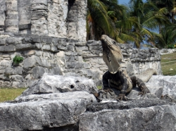 'King of the hill' - Tulum, Mexico, 2010