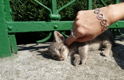 'Cat content' - Varna, Bulgaria, 2010
