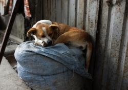 'A dog's life' - Unduavi, Bolivia, 2013