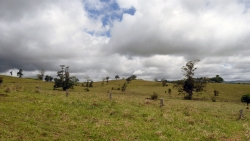 'Tablelands' - Atherton Tablelands, Queensland, Australia, 2012