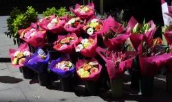 'Flowers' - Sydney, Australia, 2012