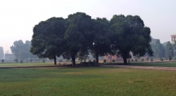 'Hazy' - Early Morning inside Red Fort, Delhi, India, 2011